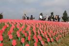 Passendale: Passchendaele Poppy Field Service of Dedication - 26/07