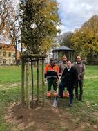 Nieuwe vredesboom in Stadspark Veurne